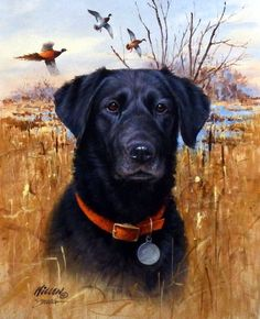A great hunting dog print for sale--TOP DOG-BLACK LAB by James Killen. Signature edition art print depicting a portrait of a Black Labrador Retriever hunting dog sitting among tall marsh grasses as ph
