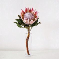 Two single pink protea=my wedding bouquet symbolizing D&I