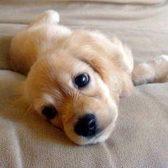 Adorable! #CutePuppy