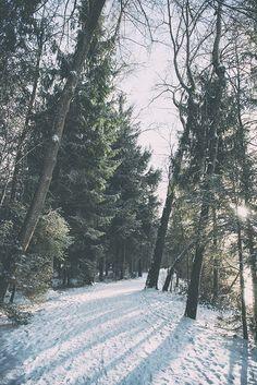 Wildpark Landsberg am Lech im Winter. Schnee Bäume Schatten