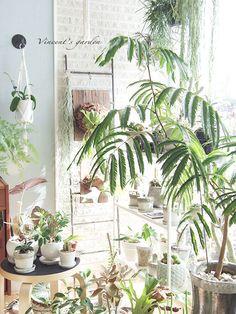 インテリアグリーン室内での水やりどうしてる? : ぶいくんの庭