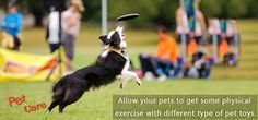 Allow your pets to get some physical exercise with different type of pet toys.