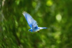 How to Use Observations of Bird Wings to Identify Species Mahatma Gandhi, Bird Pictures, Free Pictures, Birds Photos, 3 Chakra, Hummingbird Photos, Tattoo Foto, Green Living Tips, Bird Wings