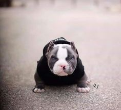 Funny animals for kids girls 53 Trendy Ideas Funny Animal Pictures, Cute Funny Animals, Cute Baby Animals, Baby Dogs, Pet Dogs, Doggies, Animals For Kids, Animals And Pets, Amstaff Terrier