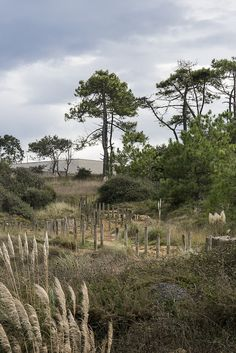 Pasarela de Playa Loredo #Cantabria #Spain