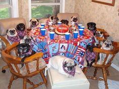 Pug family reunion.