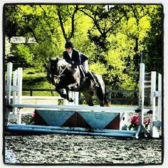 Hi def horse for sale!