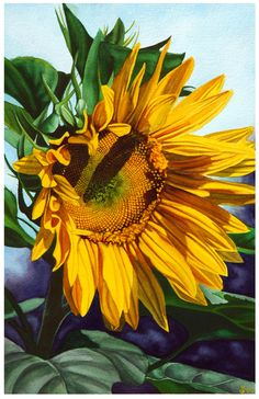 For the Love of Sunflowers by Courtney Morgenstern, via Behance Sunflowers And Daisies, Big Flowers, Flowers Nature, Exotic Flowers, Yellow Flowers, Beautiful Flowers, Sunflower Garden, Sunflower Fields, Fuerza Natural
