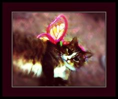 Regarding the Cat's Birthday – and Other Intolerable Acts