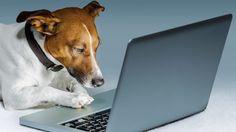 E' pet social mania: il mondo degli animali in una App