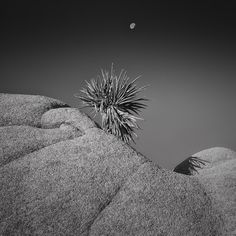 "Winner - The Ansel Adams Gallery 2012 Photography Contest ""Moon Shadow"" Trib HuVan"