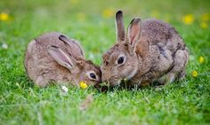 How to get rid of rabbits both in winter and in summer: 7 proven control methods and tips - Learn all of the ways of getting rid of rabbits, learn how to catch, repel and prevent them from getting into your garden
