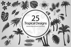 Graphic Design - Graphic Design Ideas  - Check out 25 Tropical Designs (Vector) by BioWorkZ on Creative Market   Graphic Design Ideas :     – Picture :     – Description  Check out 25 Tropical Designs (Vector) by BioWorkZ on Creative Market  -Read More –