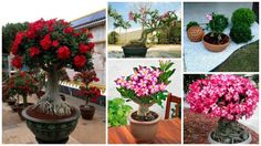 Trandafirul desertului - 15 imagini care iti vor taia rasuflarea