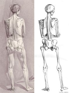 Andrew Ameral - I make sure that the skeleton I draw, properly aligns with the figure I drew from life and matches key visual points found on the living. Human Anatomy For Artists, Human Anatomy Drawing, Human Figure Drawing, Body Drawing, Life Drawing, Anatomy Reference, Art Reference, Human Skeleton Anatomy, Skeleton Drawings