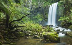 Find rainforest nature waterfall images stock images in HD and millions of other royalty-free stock photos, illustrations and vectors in the Shutterstock collection. Thousands of new, high-quality pictures added every day. Amazon Rainforest Facts, Amazon Wallpaper, Desktop Wallpapers, 1080p Wallpaper, Jungle Images, Waterfall Wallpaper, Forest Waterfall, Waterfall Scenery, Forest Background
