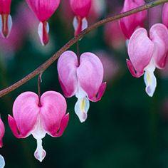 5 tips for yearlong blooming gardens: Organic Gardening