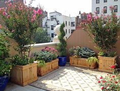 Large backyard landscaping ideas are quite many. However, for you to achieve the best landscaping for a large backyard you need to have a good design. Large Planter Boxes, Large Planters, Wood Planters, Planter Ideas, Ceramic Planters, Large Backyard Landscaping, Landscaping With Rocks, Backyard Ideas, Landscaping Tips