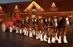 Production/Uses:  Some clydesdales are still used for farming, and pulling carriages and carts for entertainment.  They are the mascot animal for Budweiser beer. http://wiki.answers.com/Q/What_are_clydesdales_used_for_today#slide1