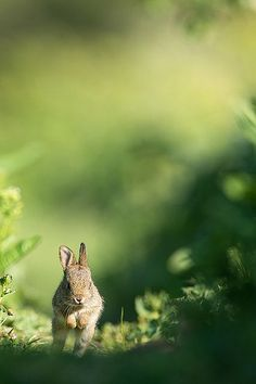 Lapin by Gérald So moment love