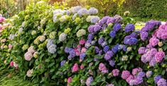 If you've got lots of shade, here are the top shade loving perennials as well as how to care for them. Shade Loving Shrubs, Shade Shrubs, Shade Perennials, Flowers Perennials, Planting Flowers, Flowering Shade Plants, Shade Garden Plants, Foliage Plants, Lily Of The Valley