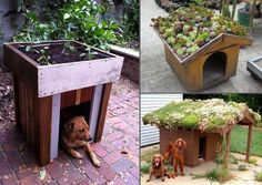 Dog House with green roof-- Cute! But maybe it rains too much here for this...
