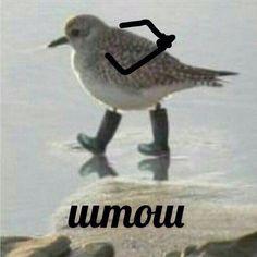 Animal Memes, Funny Animals, Cute Animals, Reaction Pictures, Funny Pictures, Hello Memes, Happy Memes, Russian Memes, Funny Mems