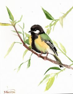 Green Backed Tit. Original watercolor painting, 10 X 8 in, wild birds, bird lover art, green black on Etsy, $29.61 AUD