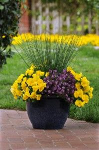 classic combination of greens makes a beautiful backdrop for vibrant-colored blooms. There is no shortage of options for incorporating these invigorating, active and radiant greens into your landscape or containers. Unique, textured grasses paired with colorful, Cool Wave pansies can punch up your front porch containers this spring.
