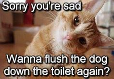 Funny cat - Sorry youre sad | Funny Dirty Adult Jokes, Memes ...