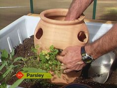 How To Plant Herb Pots