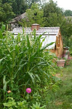 Things to plant: white/yellow corn