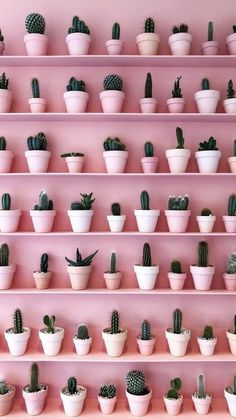 - Cactus - Le cactus et le rose : deux tendances déco qu'on adore pour ajouter une touche . The cactus and the rose: two decorative trends that we love to add a tropical touch to its interior. The cactus inspired us a candle-jewel, Sweet Cactus.