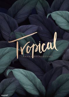 Green tropical leaves patterned background vector | premium image by rawpixel.com / eyeeyeview Tropical Background, Leaf Background, Background Patterns, Tropical Design, Tropical Pattern, Leave Pattern, High Resolution Wallpapers, Tropical Party, Wallpaper Pictures