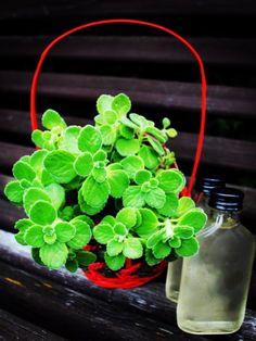 Domácí rýmovníkový sirup - Bylinkové snění Health And Beauty Tips, Lettuce, Pesto, Herbalism, Health Fitness, Beauty Hacks, Homemade, Vegetables, Garden