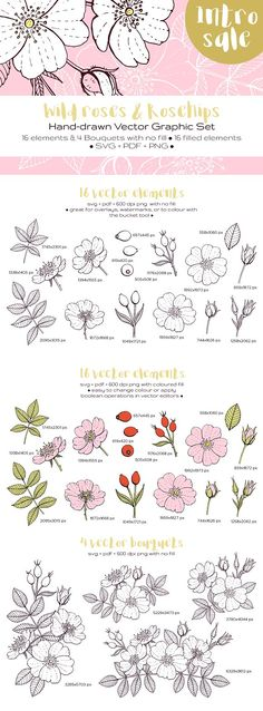 Wild Roses and Rosehips [Intro Sale] by annabellak on @creativemarket