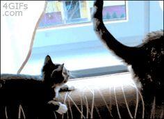 14 Funniest Cat GIFs Of The Week @Kristen Hahn-Sassy