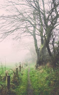 The beauty of Fog on the countryside Beautiful World, Beautiful Places, Autumn Walks, Forest Path, Country Life, Country Charm, Natural World, Nature Photos, Land Scape