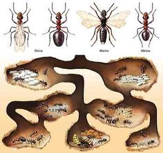 Different Types Of Ants, Ant Species, Diorama Kids, Ant Crafts, School Science Projects, Montessori, Prehistoric Creatures, Animal Projects, Summer Art