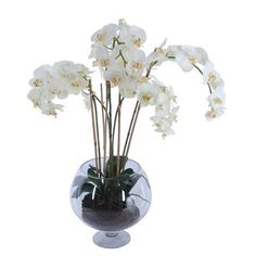 Bloomsbury Market Water Phalaenopsis Orchid Centerpiece in Vase Best Bathroom Paint Colors, Bathroom Color Schemes, Bathroom Colours, Silk Orchids, Phalaenopsis Orchid, Orange Paint Colors, Tiny Powder Rooms, Taupe Walls, Orchid Centerpieces