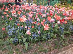 Jardin de Claude Monet a giverny (Eure , France )