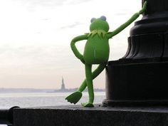 Kermit taking in the view in New York <3