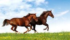 Resultado de imagen de utensilios de caballos