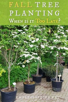When is it too Late to Plant Trees in Fall? When is it too late to plant trees in fall and what's the best way to plant a tree. Find out here. Cold Climate Gardening, Organic Gardening, Organic Vegetables, Growing Vegetables, Growing Tomatoes, Growing Plants, Trees And Shrubs, Trees To Plant, Tree Planting