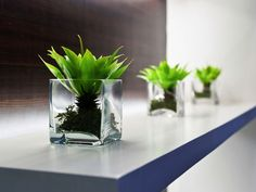 Best Plants for Office Desk - Contemporary Home Office Furniture Check more at http://www.drjamesghoodblog.com/best-plants-for-office-desk/