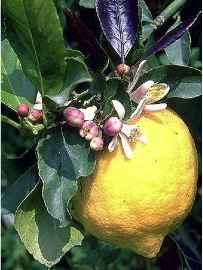 Organic Gardening Supplies Near Me Garden Online, Vegetable Garden Design, Permaculture, Garden Crafts, Horticulture, Potted Plants, Winter, Seeds, Green