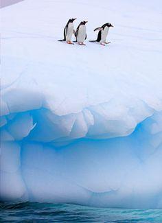 Antartica ♕BOUTIQUE CHIC♕