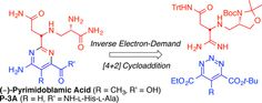 Total Syntheses of (−)-Pyrimidoblamic Acid and P-3A
