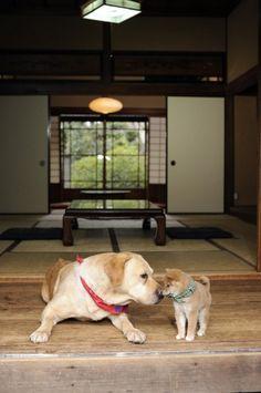 画像・写真|テレビ東京『和風総本家』の人気マスコット・豆助(右)とまさお君がコラボ 2枚目