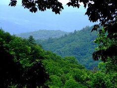 Daniel Boone National Forest / Whitley, KY, USA